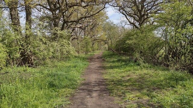 Wood Lane bridleway heading towards Hill Farm
