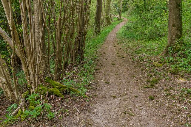 Footpath through Dawcombe Wood