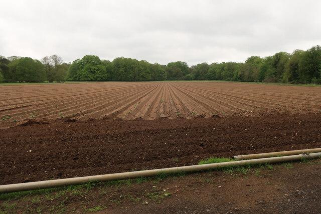Prepared vegetable field