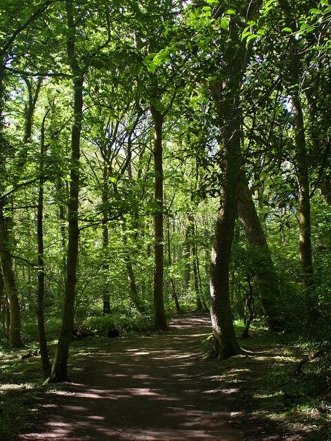 Footpath in Ecclesall Woods