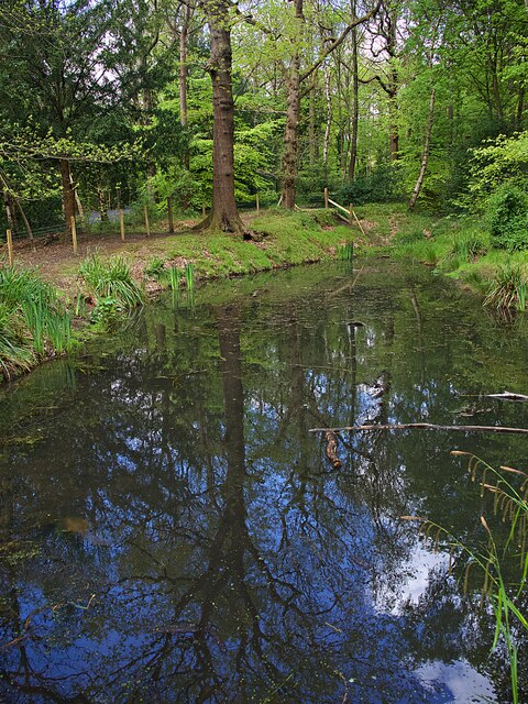 Collier's Pond in Ecclesall Woods