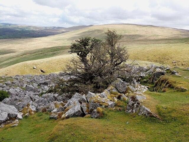 Tree amid the rocks