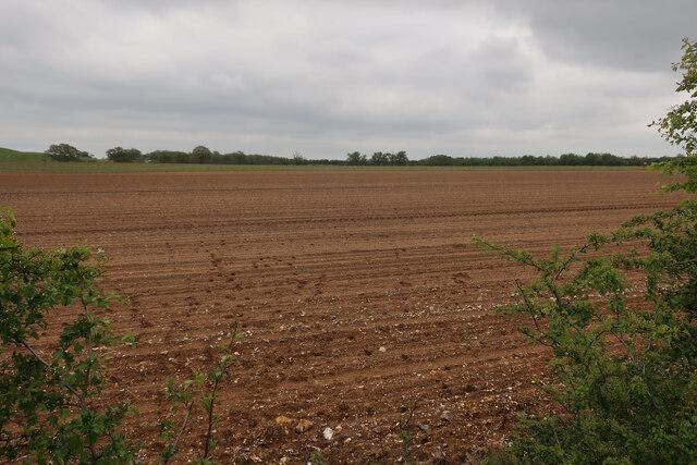 Prepared arable field