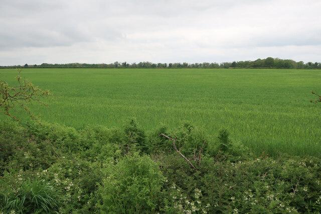 Field on Risby Poor's Heath