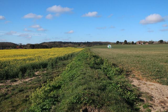 Fields by the coast path