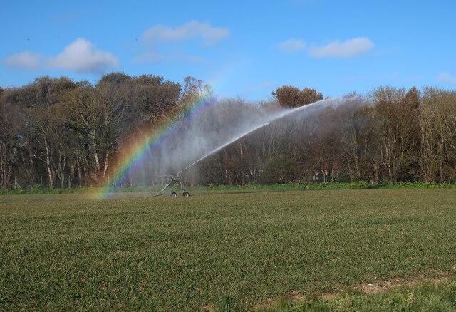 Irrigation spray near Sidestrand