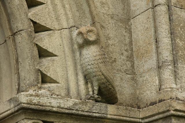 Scofton Owl