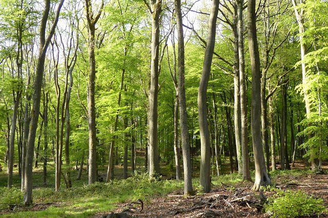 Hawkridge Wood, Frilsham