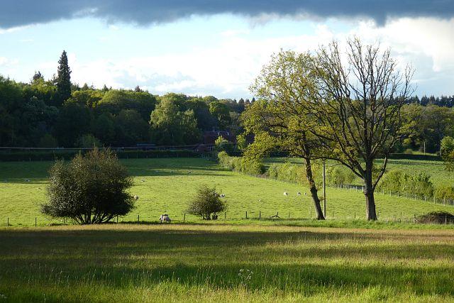 Pasture, Hermitage