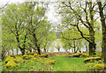 NN1060 : Mossed-over boulders among trees on north side of Loch Leven by Trevor Littlewood
