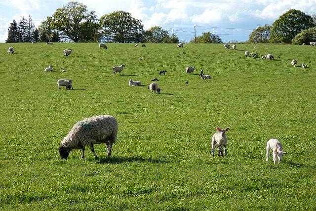 Pasture, Bucklebury