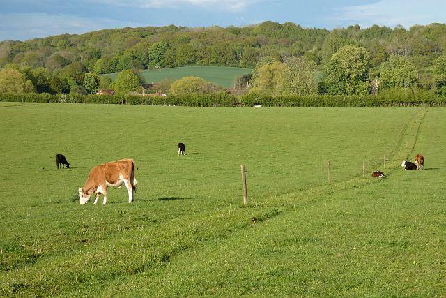 Pasture, Frilsham