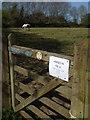 ST9682 : Horses in field by Neil Owen