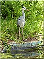 ST7365 : A grey heron by Philip Halling