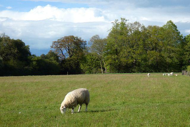 Pasture, East Woodhay