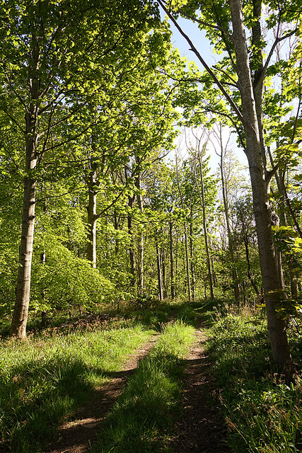 Woods at Cairnfield