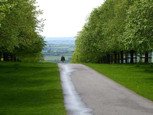 Tree-lined drive, Dyrham Park