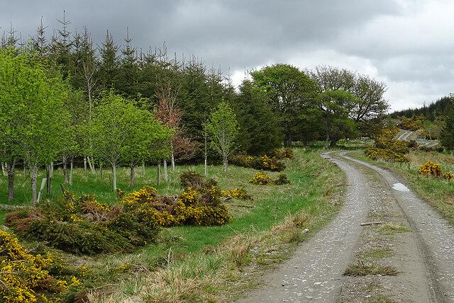 Road near Whitecow
