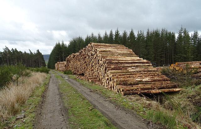 Log Piles at Starhead