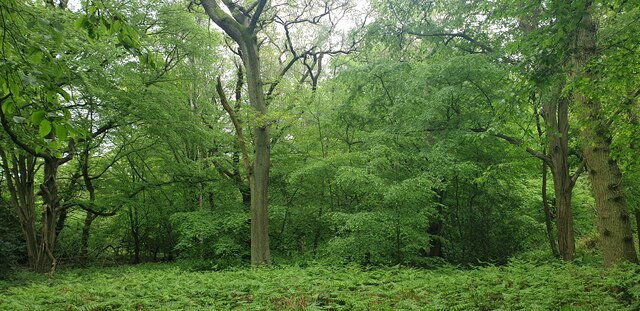 Woodland in Trent Park, Cockfosters