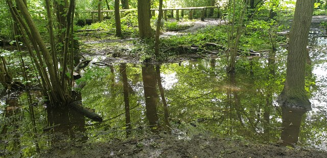Temporary Pond in Trent Park, Cockfosters