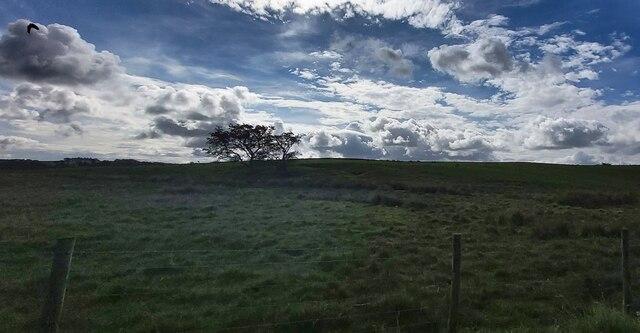 Hillside Langley Moss