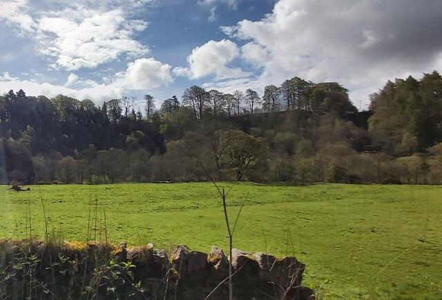 Field near Tarryback Wood