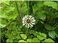 TF0820 : Undergrowth by Bob Harvey