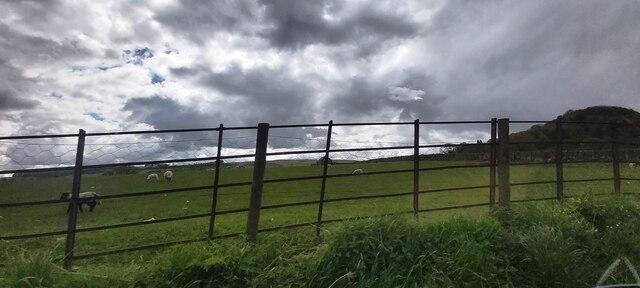 Sheep Pasture North of Pooley Bridge