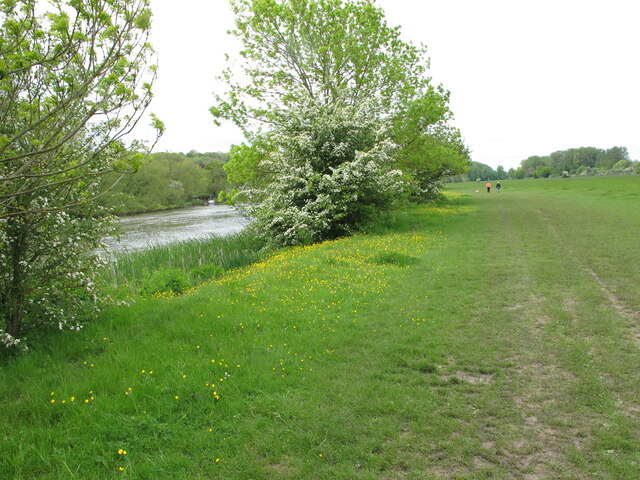 Buttercups and hawthorn blossom by River Thames