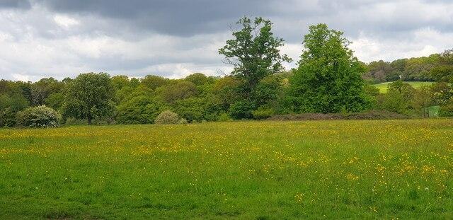 Wildflower Meadow, Trent Park