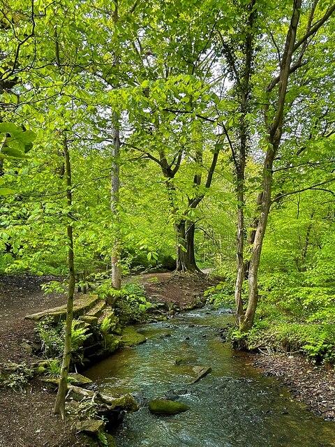 Porter Brook in Whiteley Woods