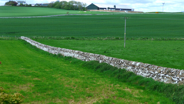 Wall down to the Drummullin Burn