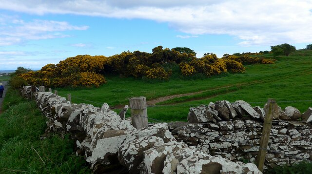 Wall and gorse by the road to Isle of Whithorn