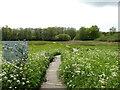 TG2635 : Alternative Entrance to Southrepps Nature reserve by David Pashley