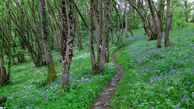 The path through Cruggleton Woods