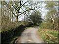 SD2786 : The Cumbria Way, Pickle Wood by Adrian Taylor