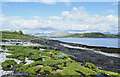 NM8844 : Grass, rocks and shingle at shore of Lismore by Trevor Littlewood