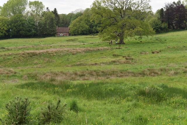 Marshy field north of St Mary's Church