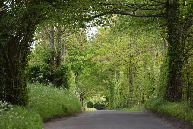 Tree tunnel over Witherington Road