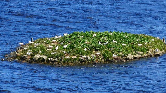 Nesting terns on the islet off Mount Marlborough