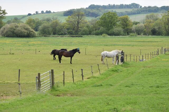 Horses in paddocks near Alderbury Farm