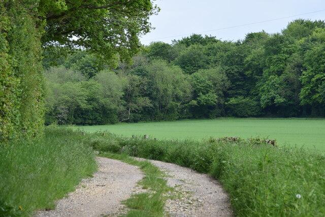 Path on the edge of Treasurers' Dean Wood