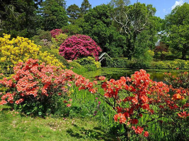 Springtime at Bargany Estate