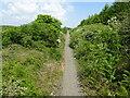 NZ3142 : Sherburn Colliery railway station (site), County Durham by Nigel Thompson