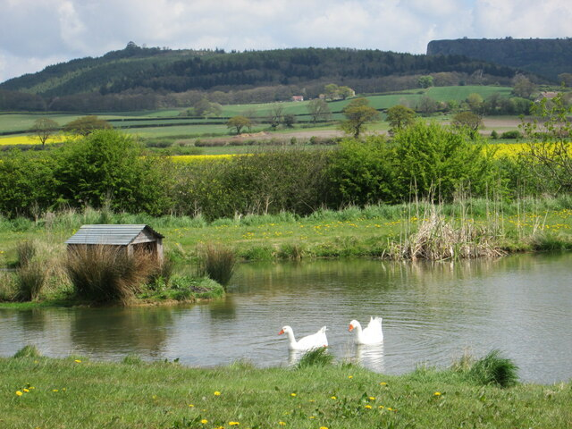 Pond near High House Farm