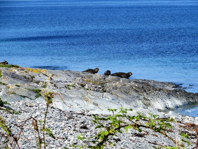 Seals on the foreshore on Inchmarnock