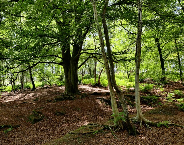Woodland at the Lickey Hills Country Park