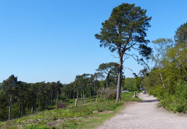 Path at Cofton Hill