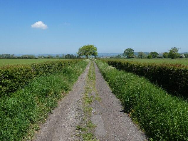 Drove on Hearty Moor